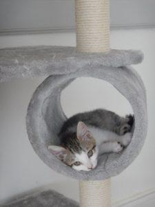Garde de chats à domicile