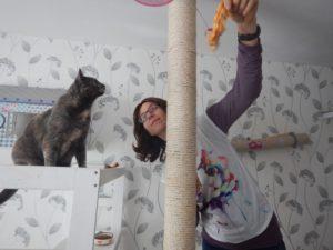 Garde de chats à domicile dans l'Ain