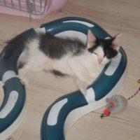 Circuit jeu pour chats