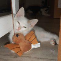 Perche pour chats